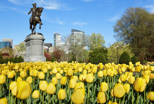 Weekend Wandering: What to Do in Boston
